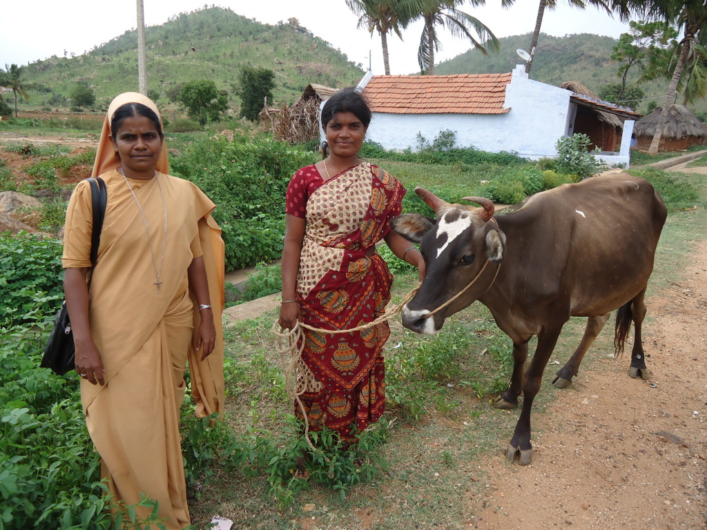 Animal Husbandry under Save a Family Project