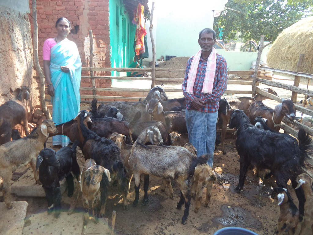 Animal Husbandry under Save a Family Project..