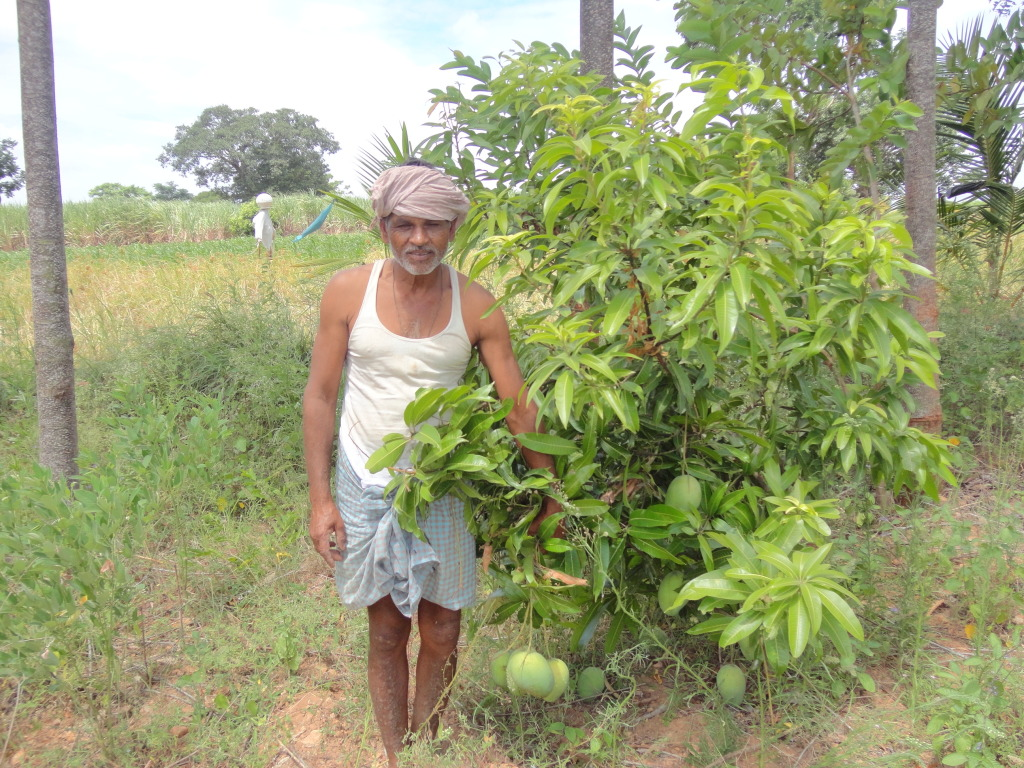 Mr. Mahadevappa- Model farmer at B.G. Halli watershed area