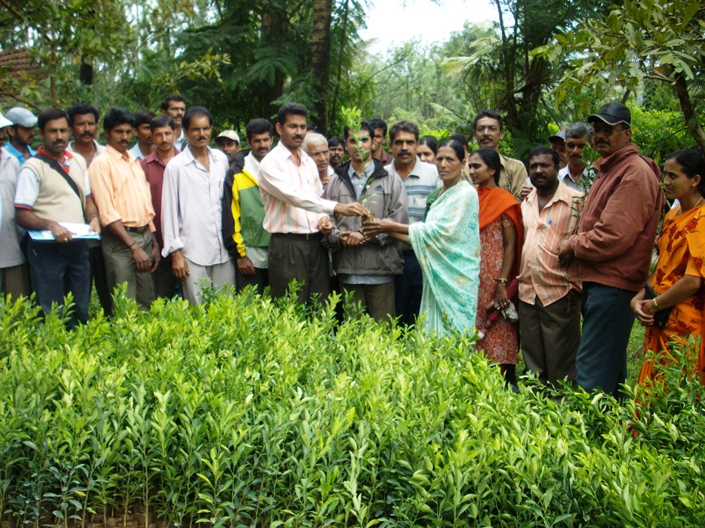 Plant Saplings distributed to small and marginalised farmers at Somwarpete