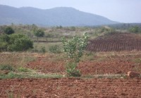 Change of Uncultivable land to Cultivable land  by the farmer Madulaimuthu at Mariyapura