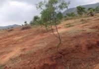 Impact of Watershed activities at Prakashpalya
