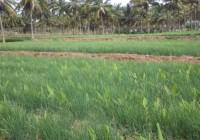 Watershed Impact at Pushpapura
